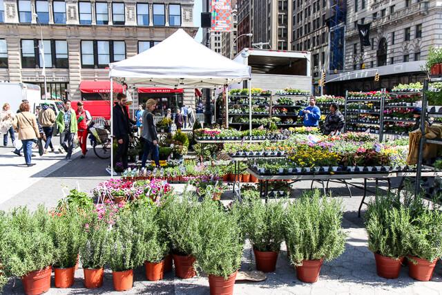union square greenmarket-2215