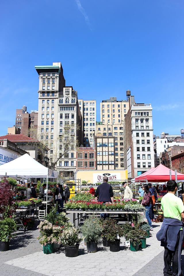 union square greenmarket-2249