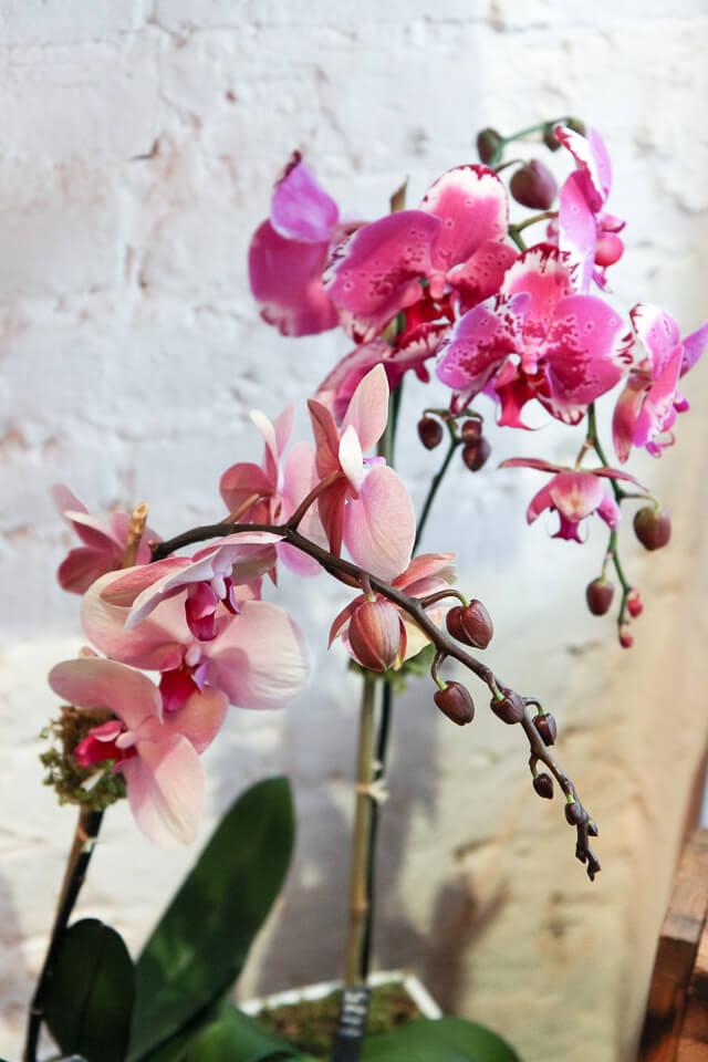 flower girl nyc-3064