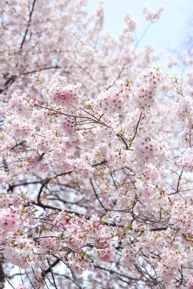 spring in central park -5628