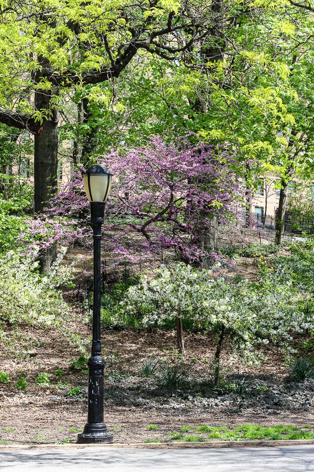 riverside park-2959