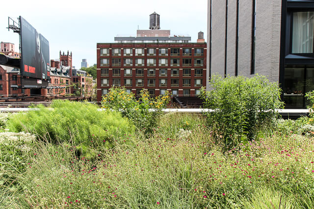 the high line-4077