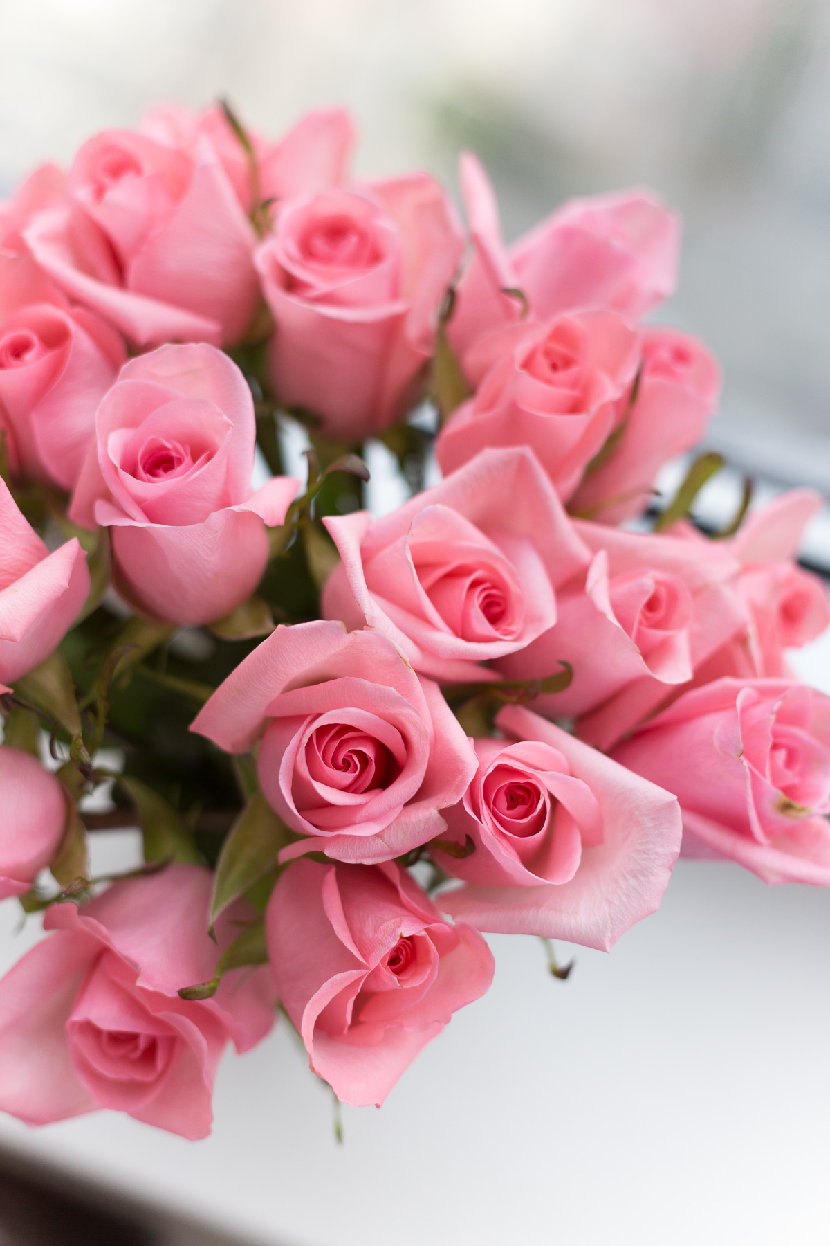 pink-roses-5765