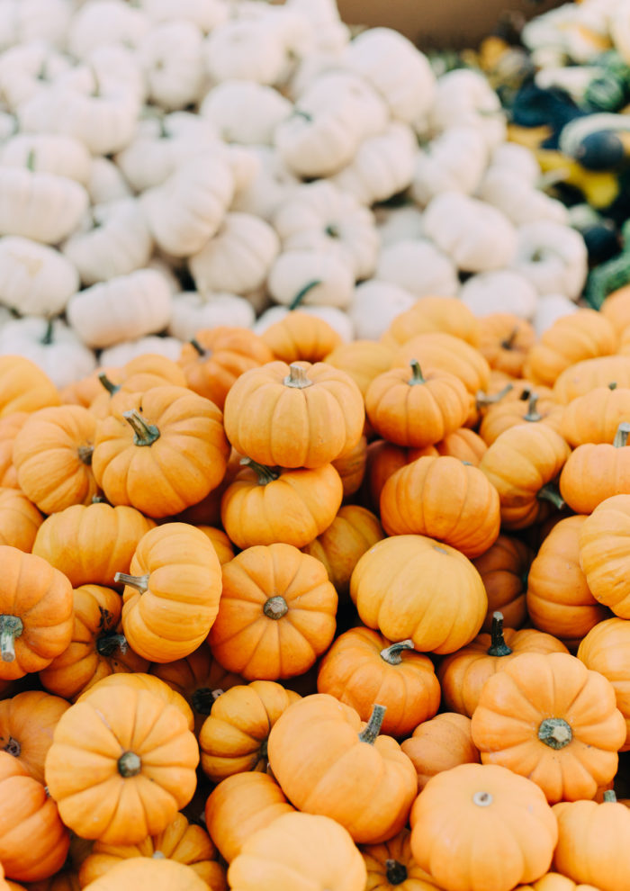 Photo Essays: Fall at the Farmers Market