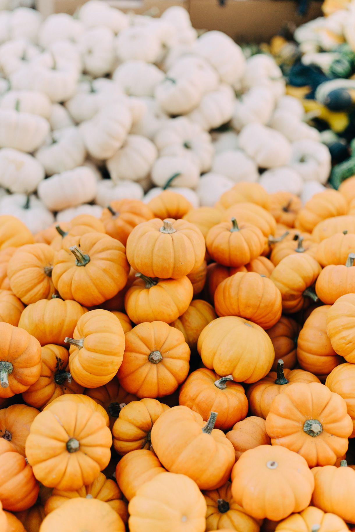 fall-at-union-square-farmers-market-3025