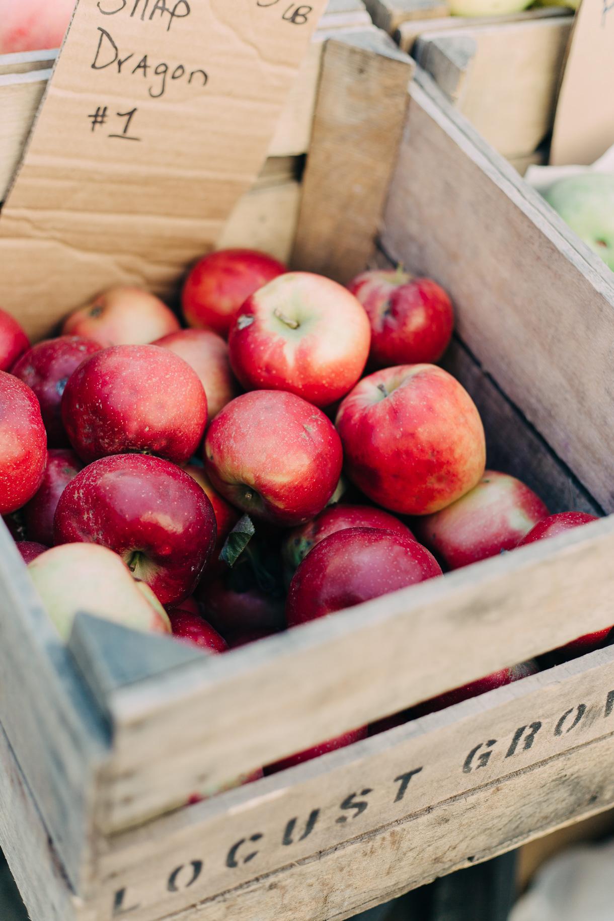 fall-at-union-square-farmers-market-3056
