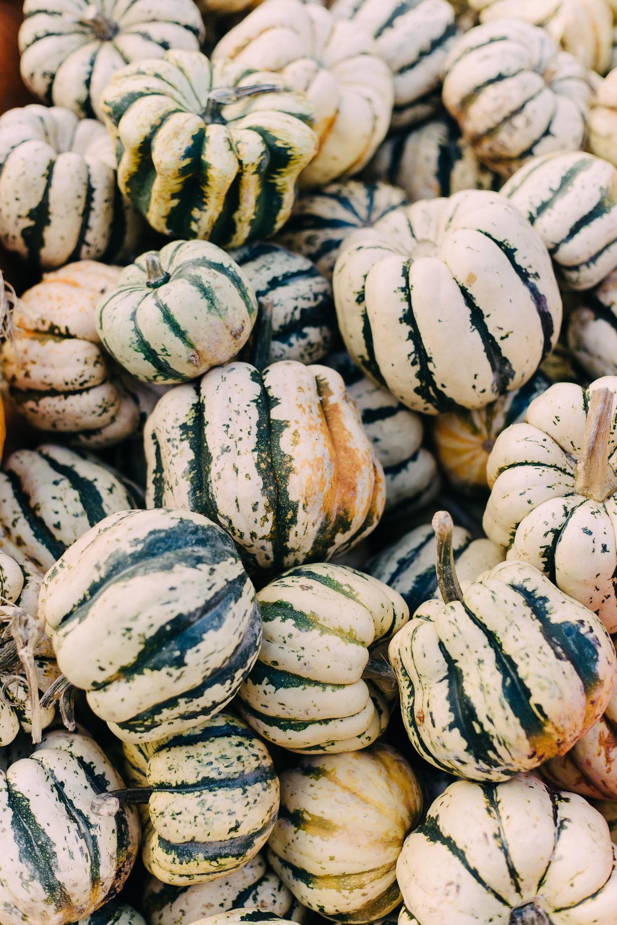 fall-at-union-square-farmers-market-3067