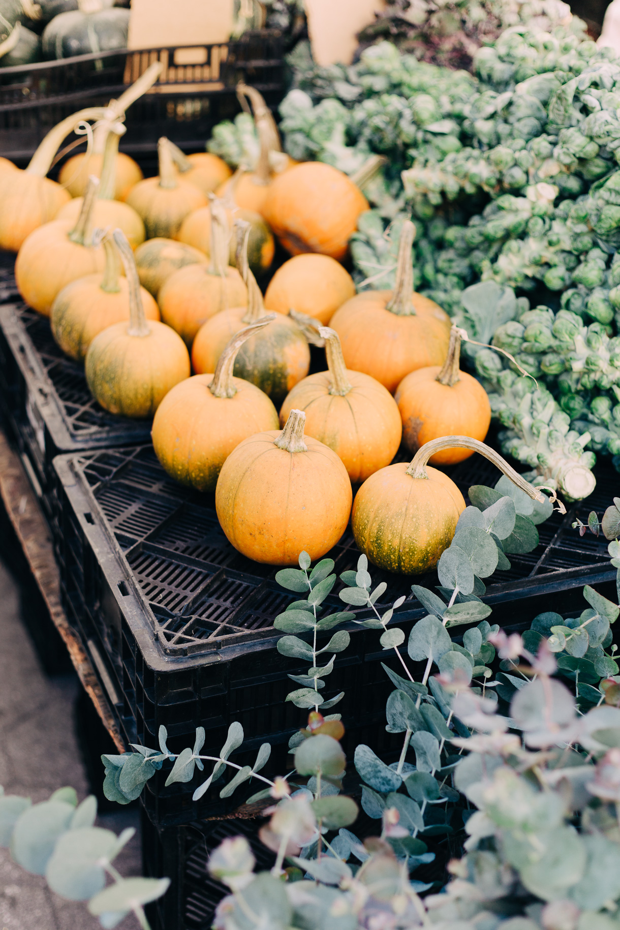 fall-at-union-square-farmers-market-3076
