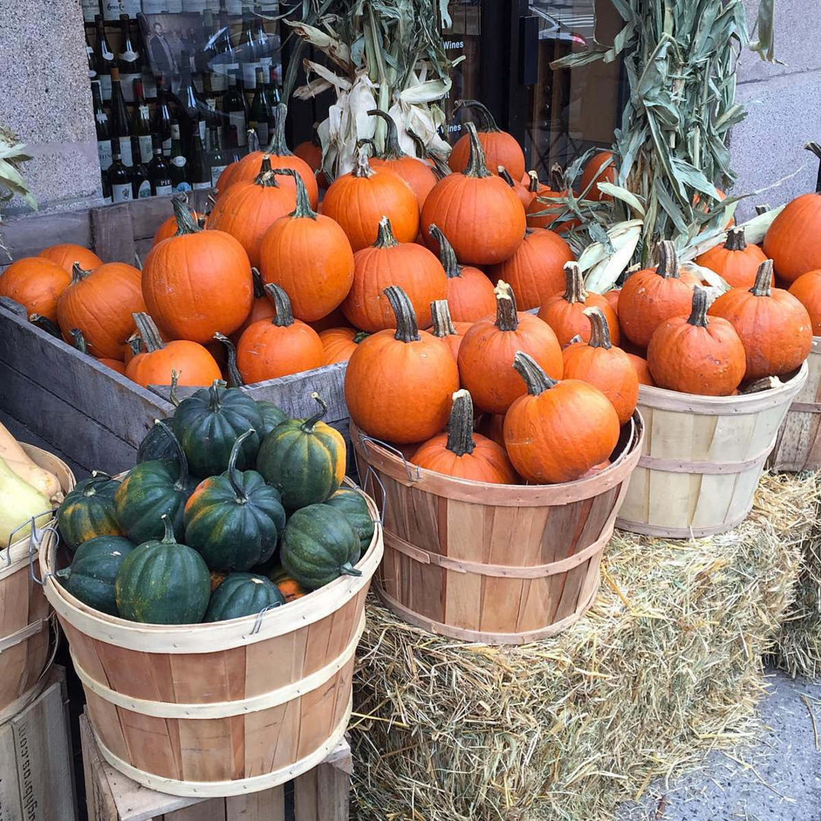 october-pumpkins-nyc