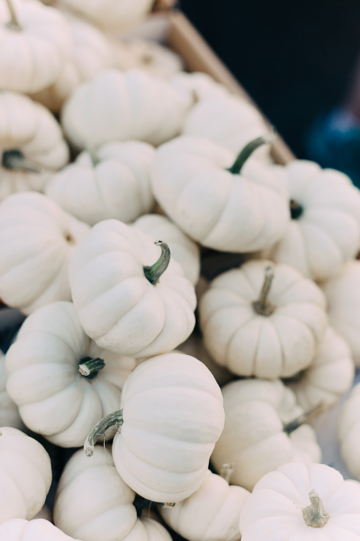 white-pumpkins-3027