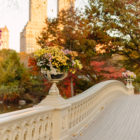 Photo Essays: The Bow Bridge in Autumn