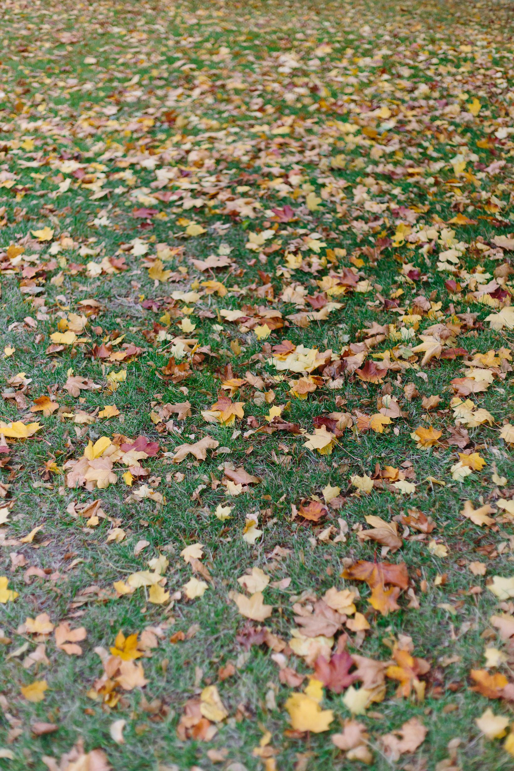autumn-in-hyde-park-london-4112
