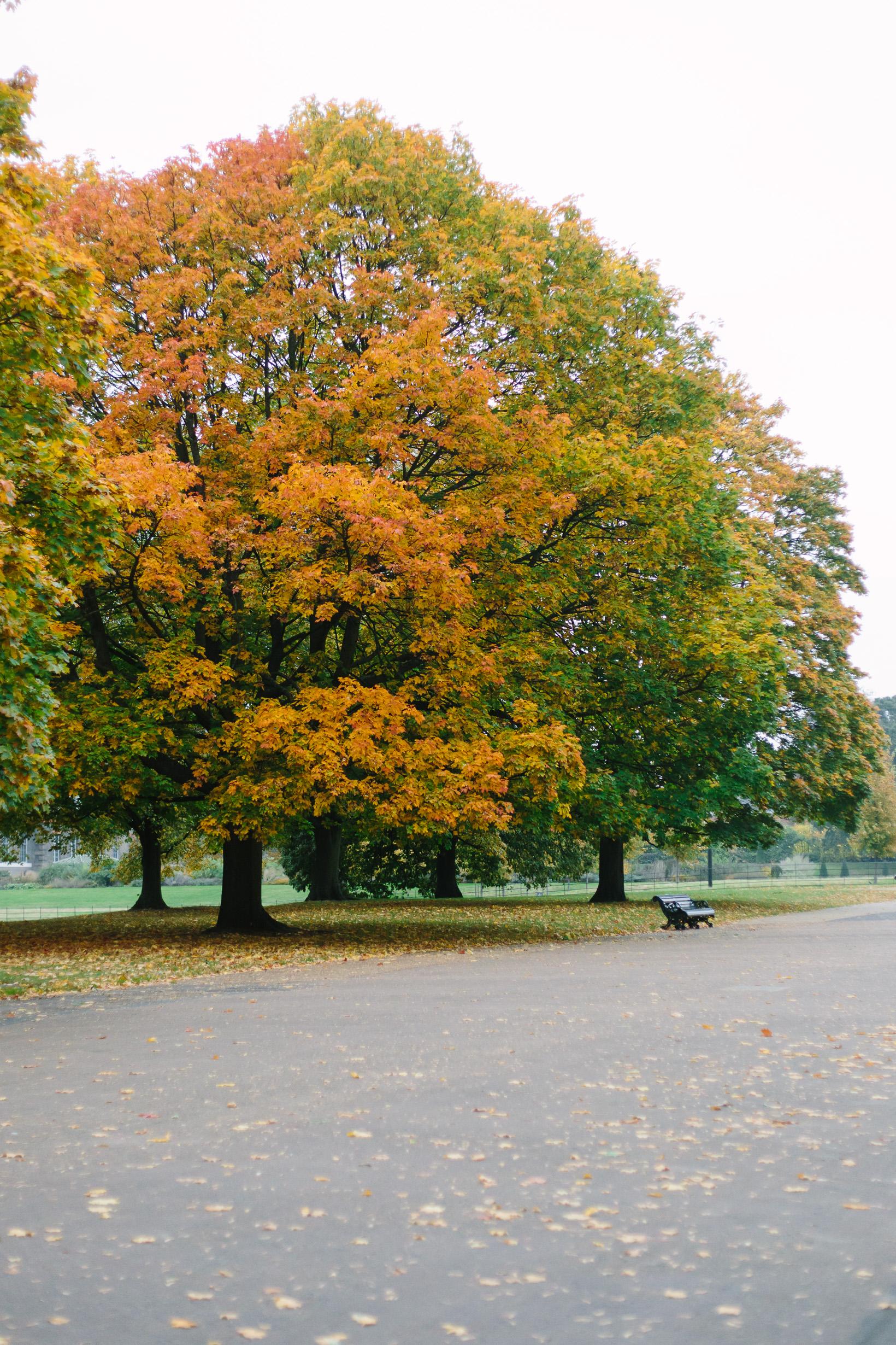 fall-in-hyde-park-london-4107