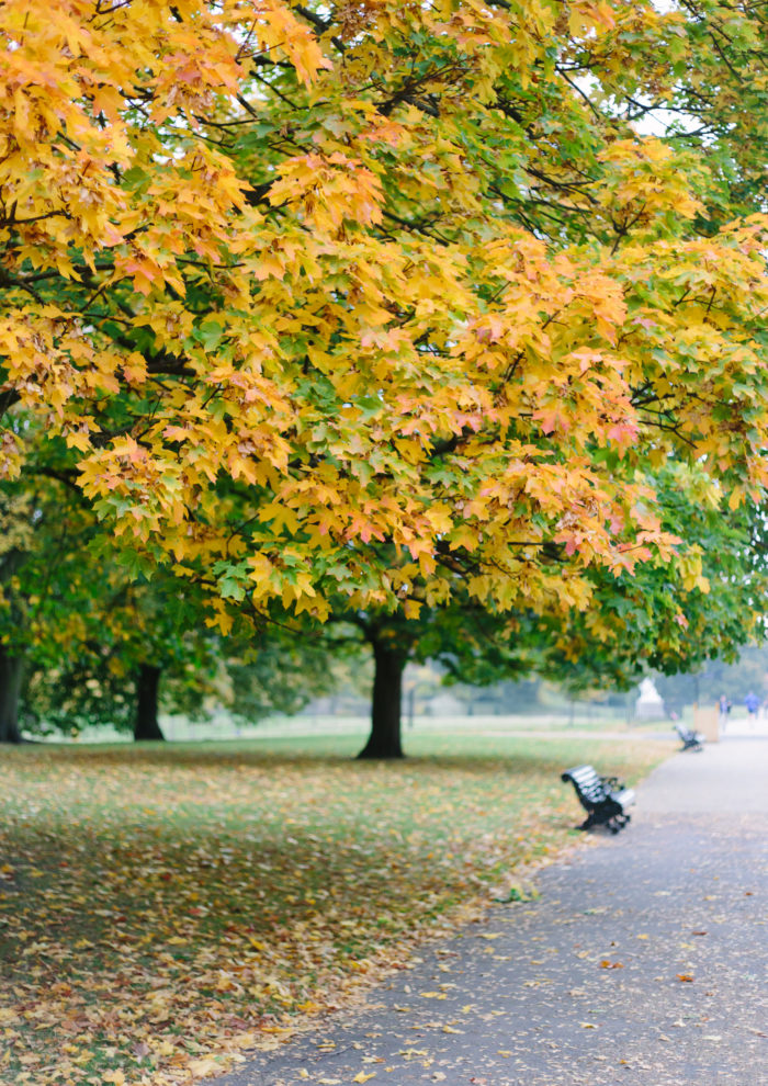 London Photo Essays: Autumn in Hyde Park