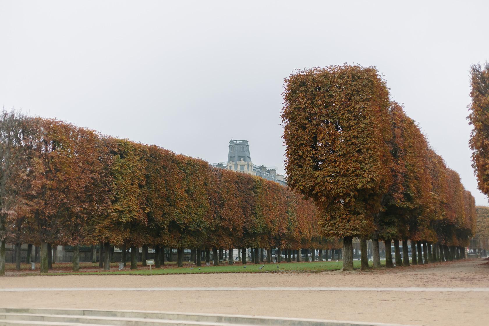 jardin-du-luxembourg-paris-4931