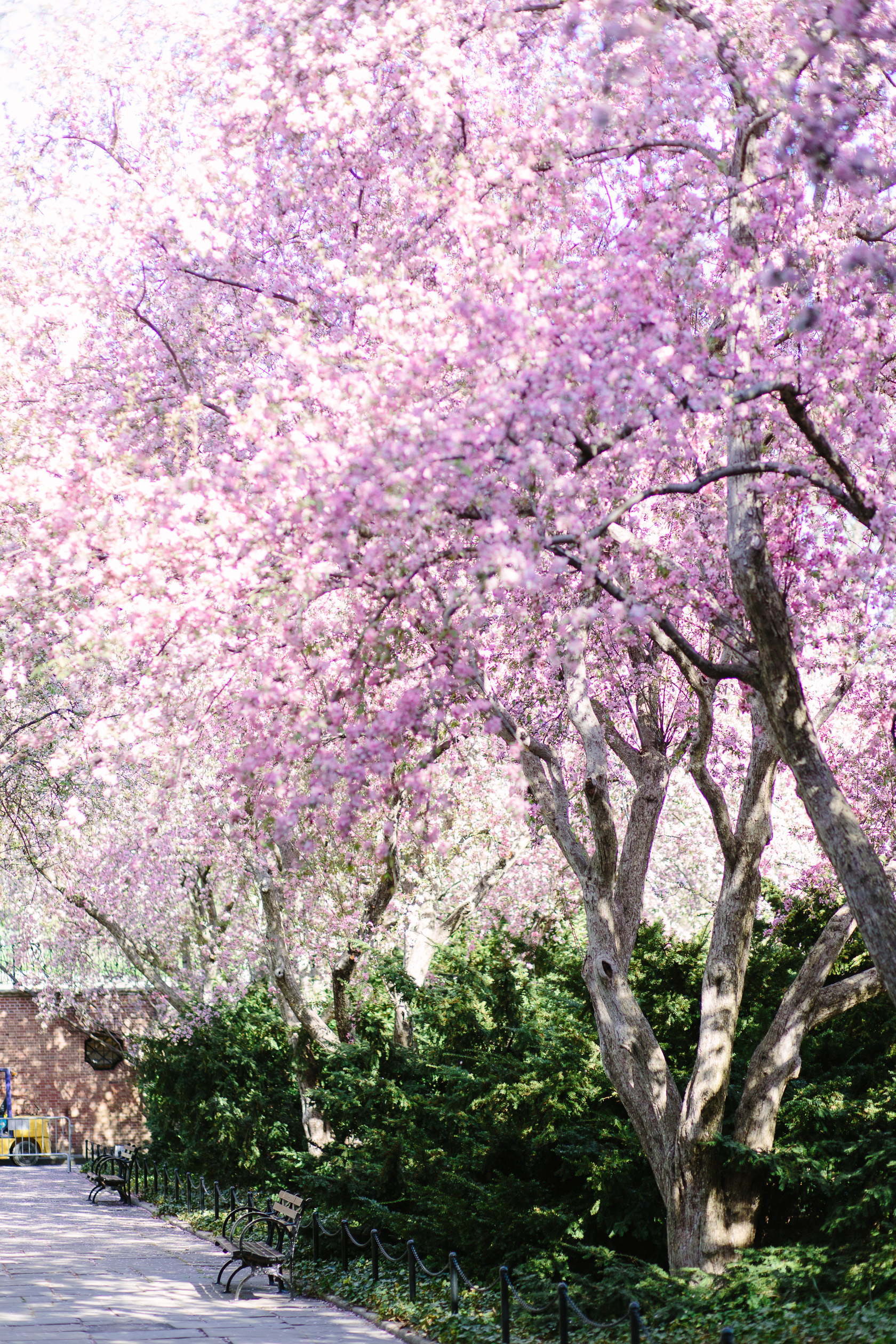 5 Reasons To Visit the Central Park Conservatory Garden in Spring