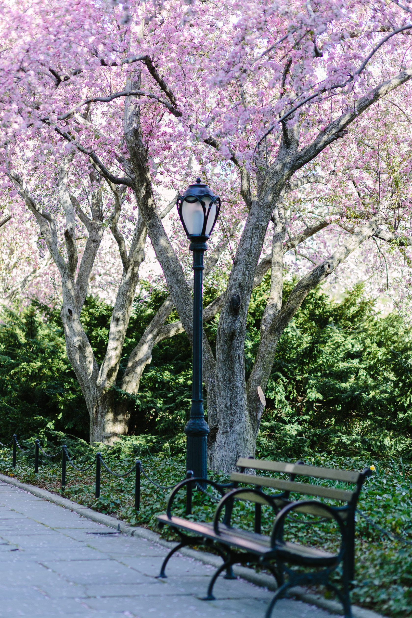 5 Reasons To Visit The Central Park Conservatory Garden In