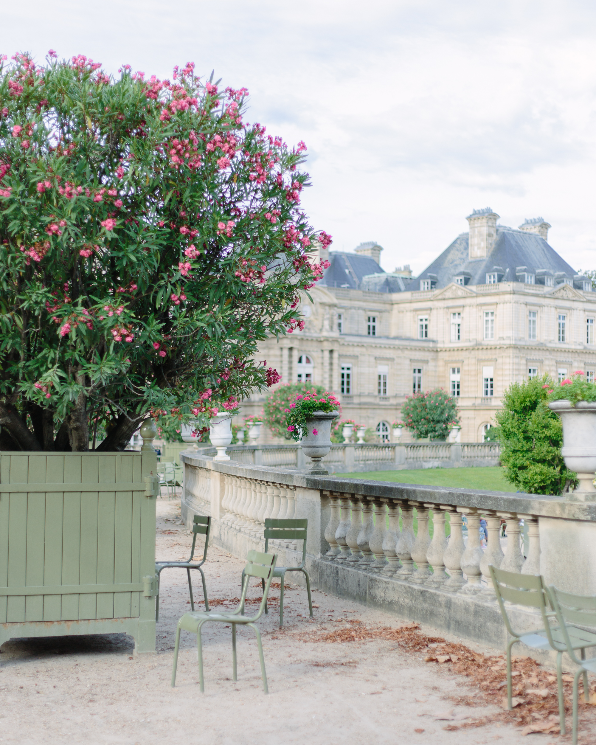 Luxembourg Gardens in August with pink flowers blooming