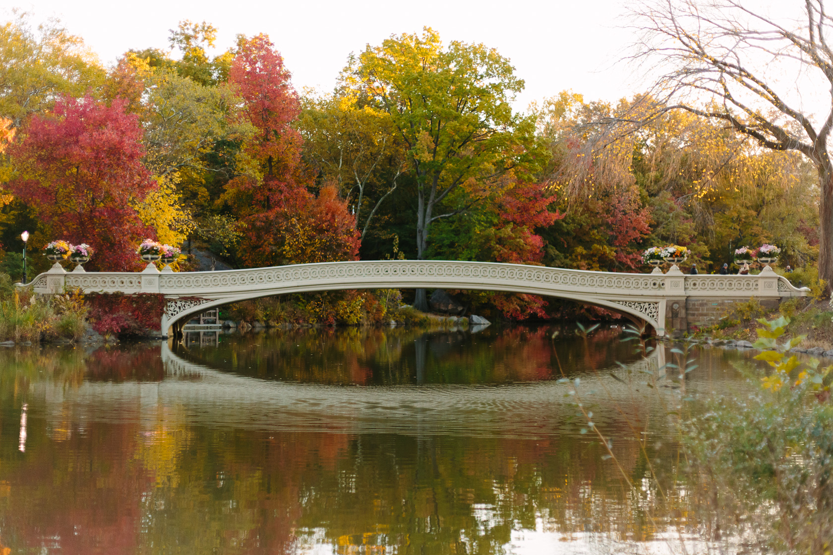 Central Park Bow Bridge in fall