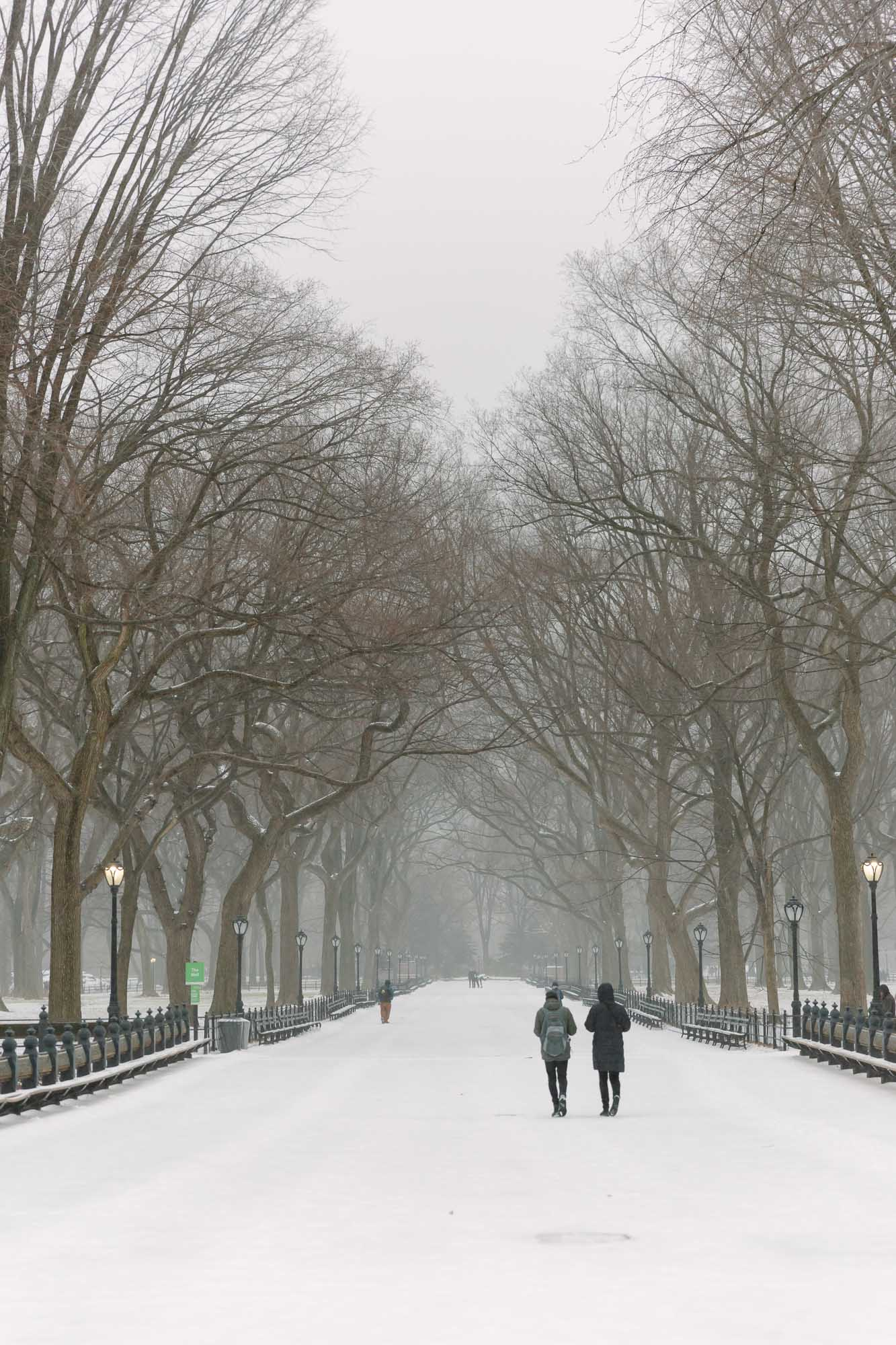 Snow in Central Park | NYC | York Avenue - the blog