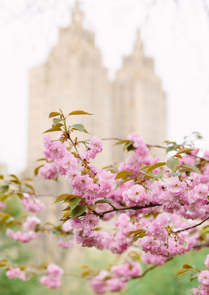 Where to Find Spring Cherry Blossoms on the Upper East Side (and other beautiful blooms!)