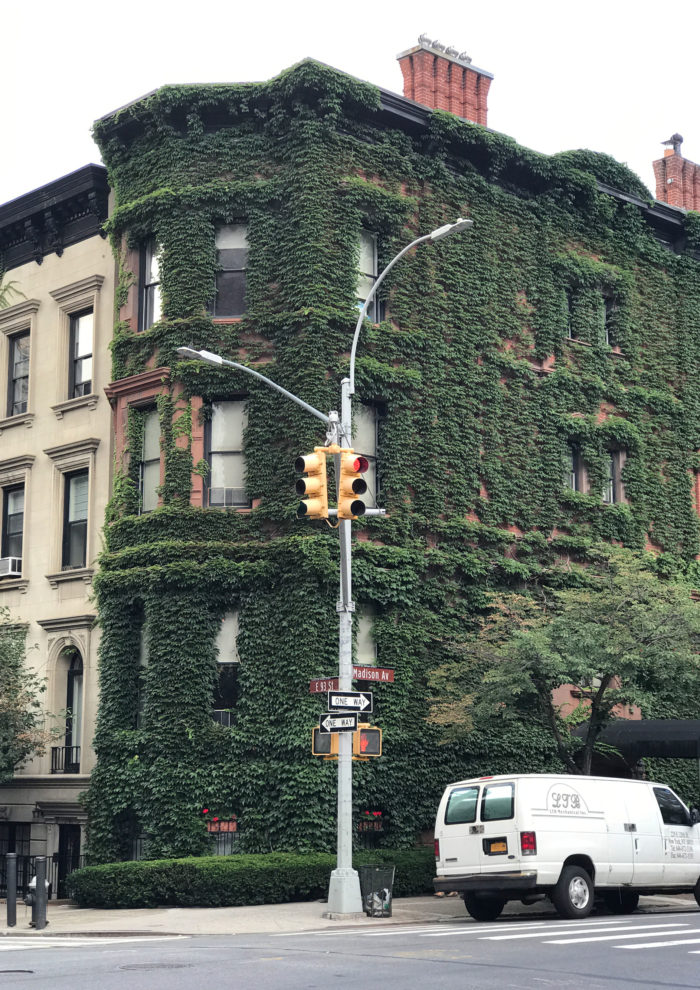 Where to Find Ivy Covered Houses in NYC
